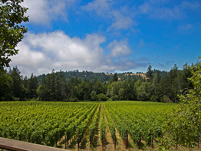 Vineyards And Wineries For Sale Inventory | Napa And Sonoma