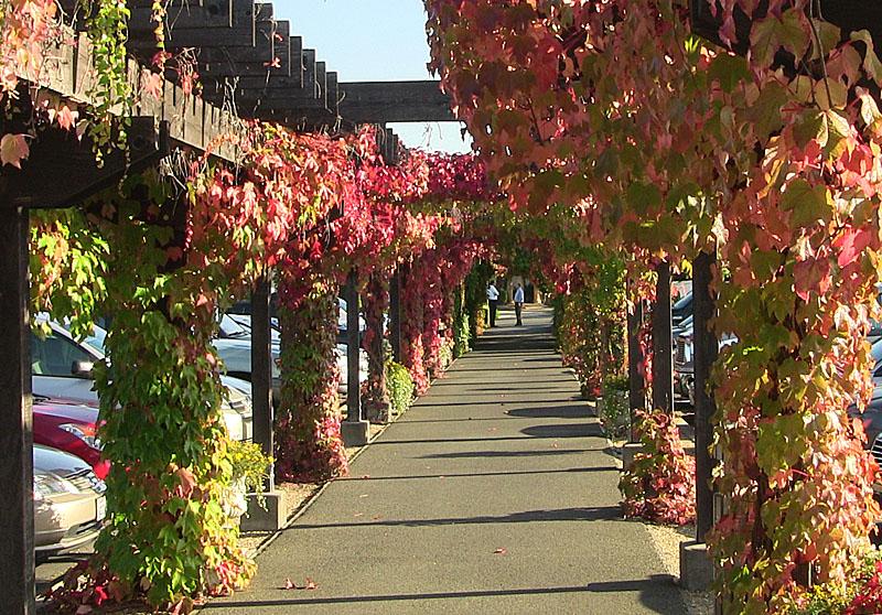 Wine County Ambiance