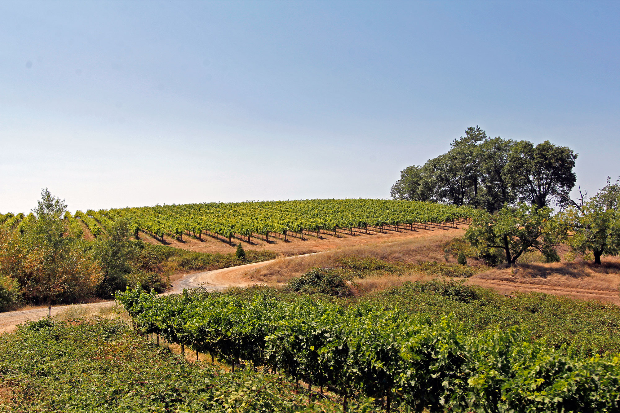Upper Vineyard, Fair Play, Sierra Foothills, winery and vineyard for sale