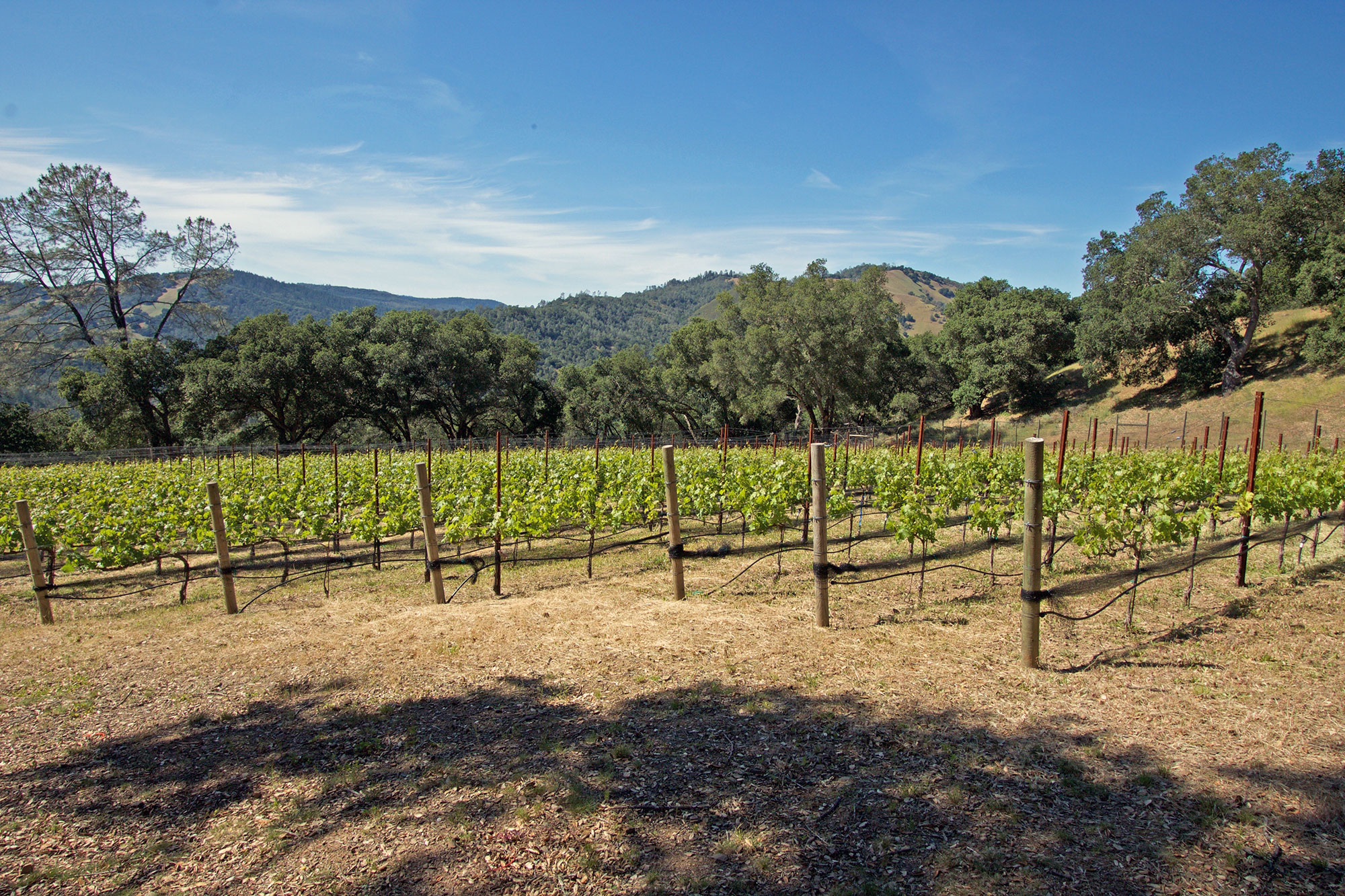 Vineyard View across premium Napa Valley vineyard