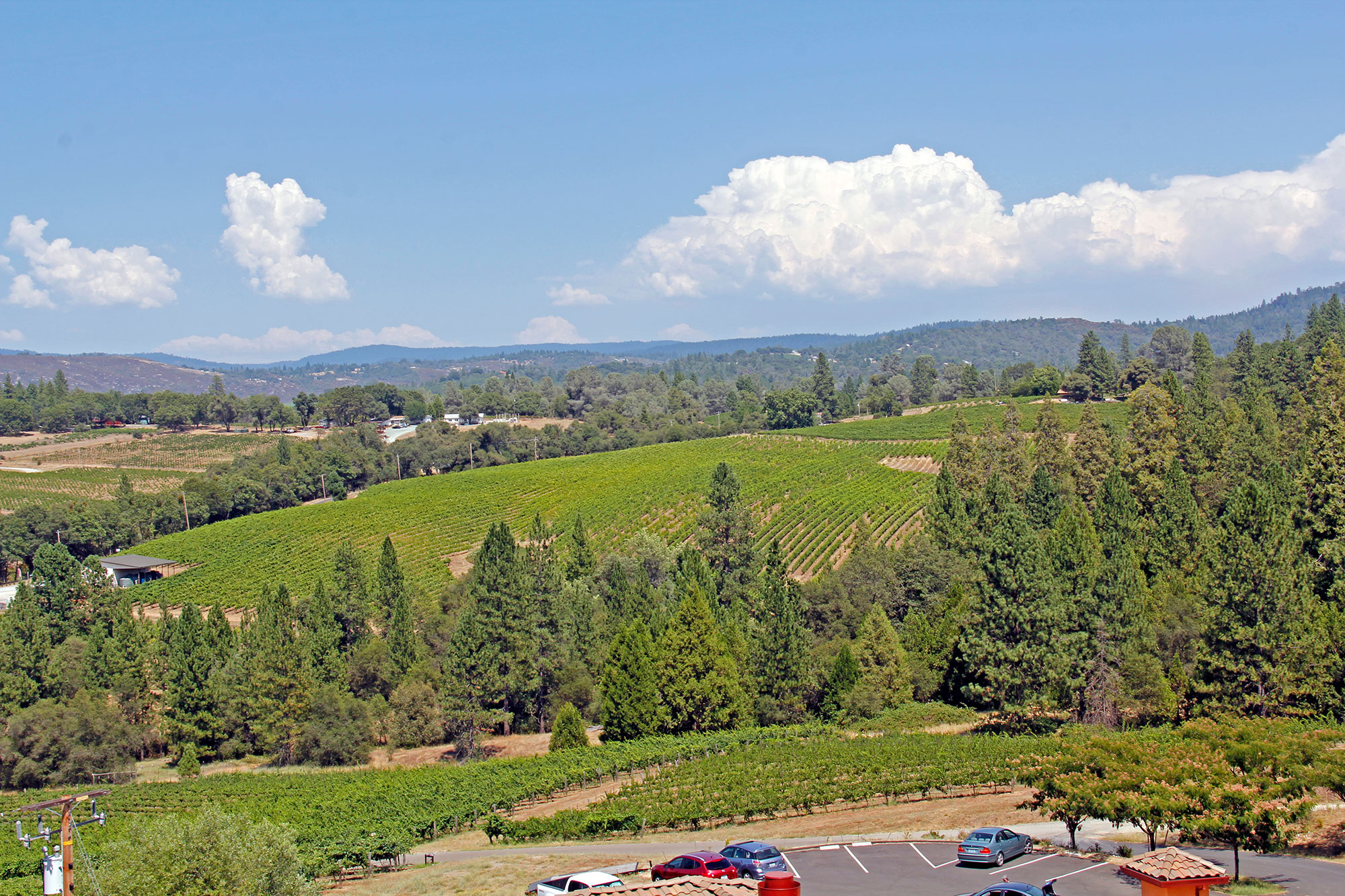 Fair Play AVA, Sierra Foothills Vineyard Views