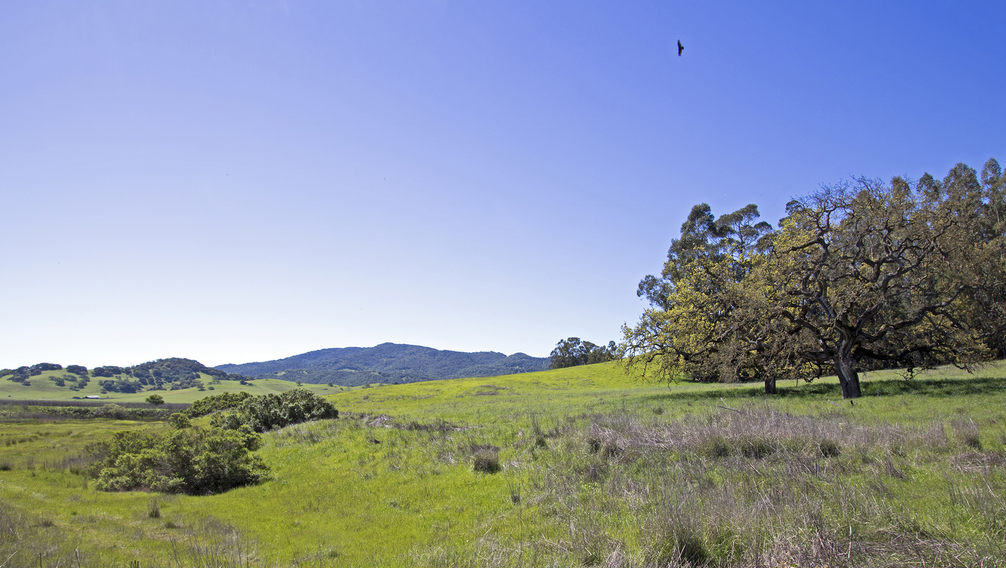 Gorgeous Sonoma County Ranch - Petaluma