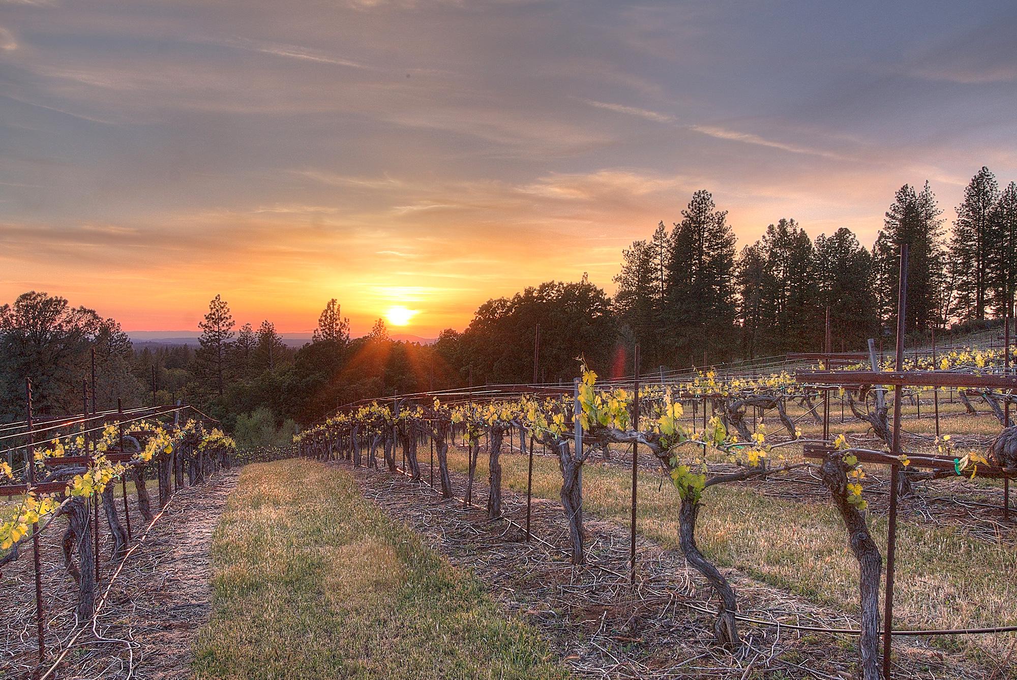 Premium Sierra Foothills Estate Vineyard & Winery - Vintroux