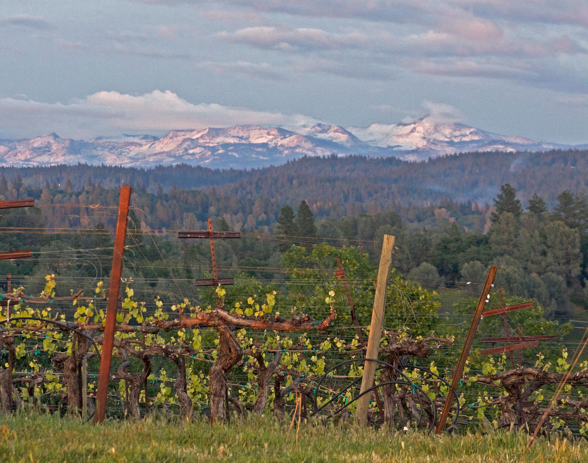 Premium Sierra Foothills Estate Vineyard and Winery