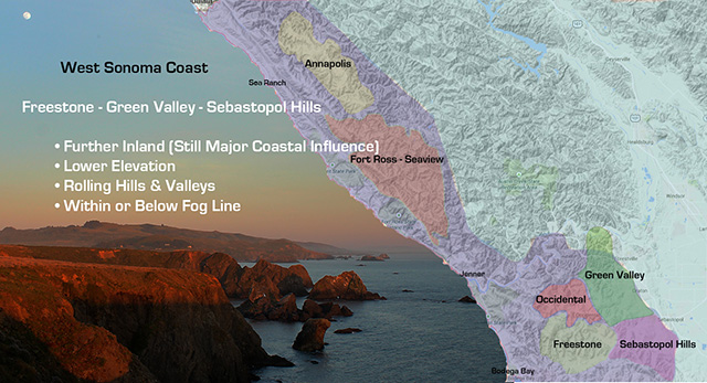 West Sonoma Coast Grape Growing, Freestone, Green Valley, Sebastopol, Hills, vineyard, wine, chardonnay, pinot noir