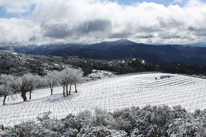 snow, vineyard, wine, cloverdale, pine mountain, cabernet