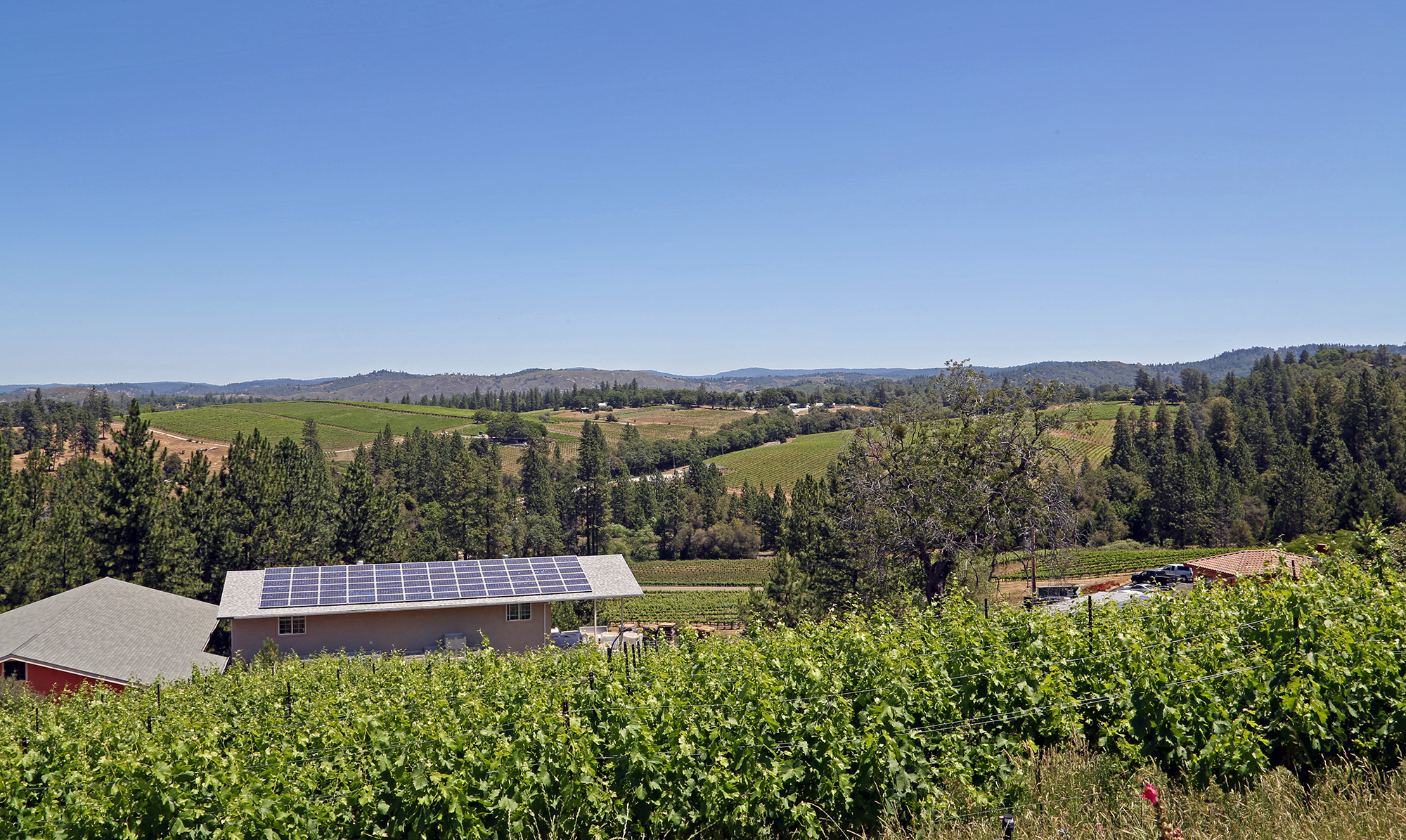 Sierra Foothills Profitable Winery For Sale