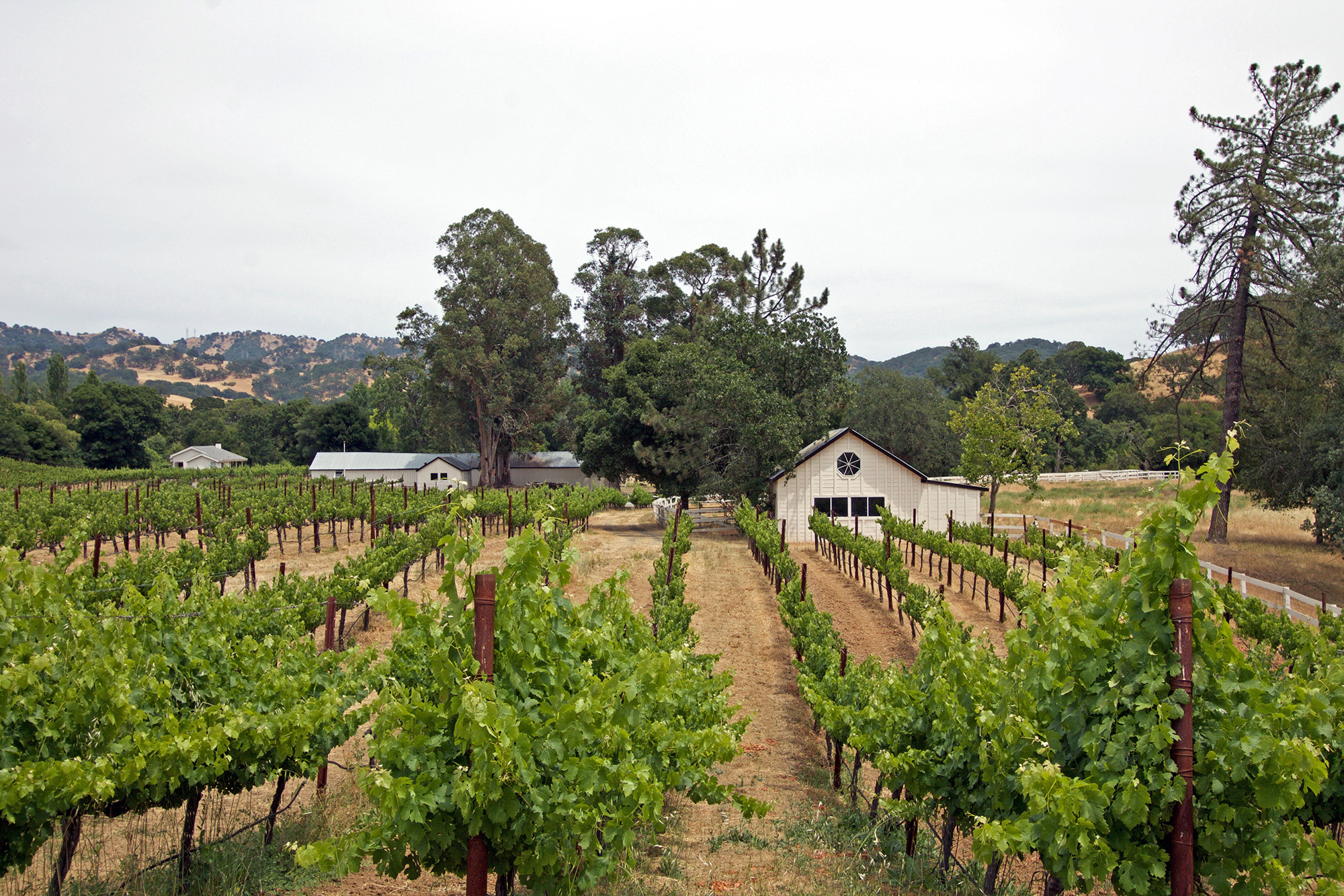 Napa Prestige - Vineyard Estate