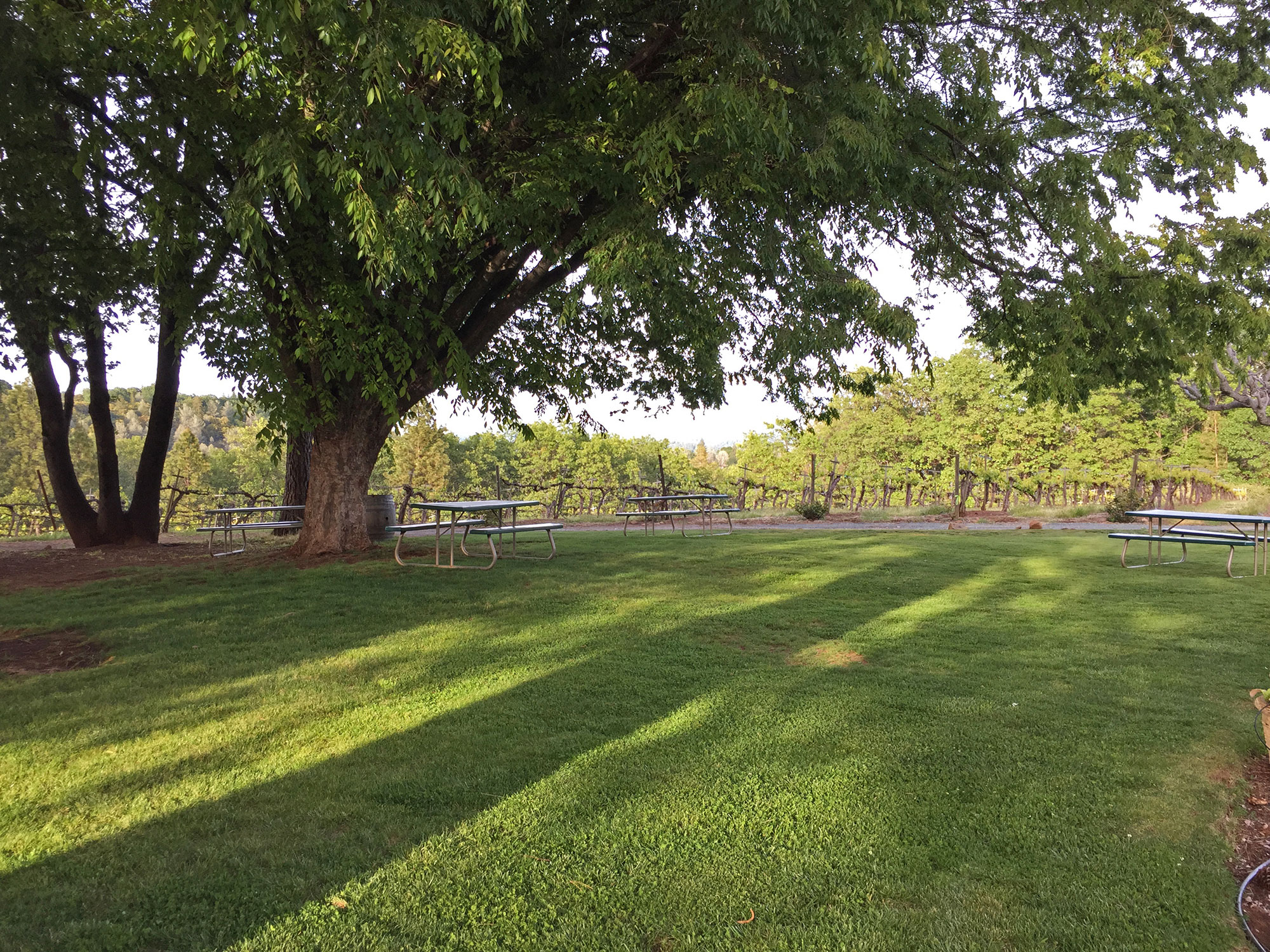 Sierra Foothills Winery For Sale