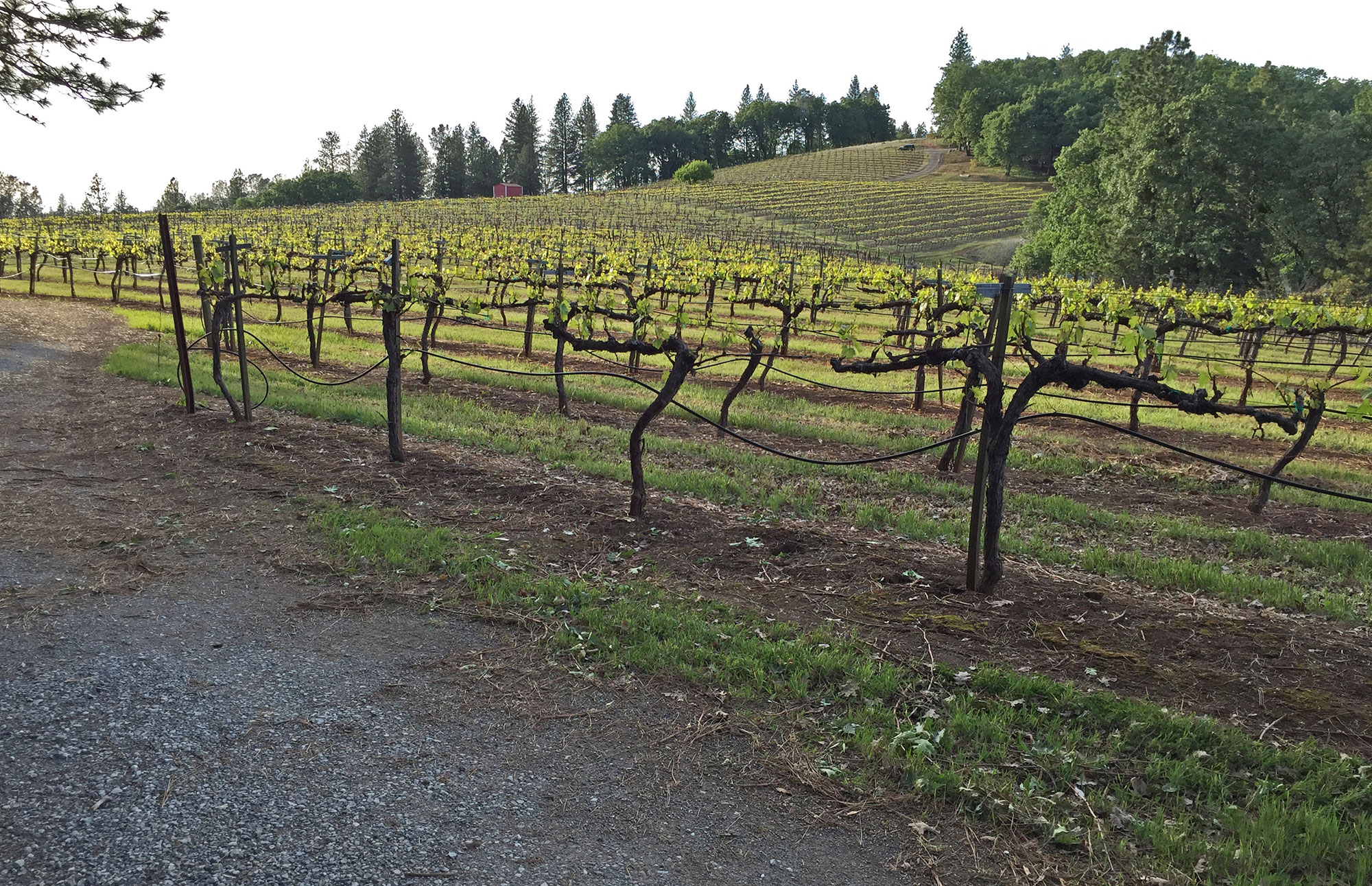 Premium Sierra Foothills Estate Vineyard and Winery
