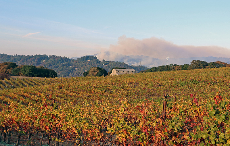 Sonoma Napa Wildfire Smoke Vineyard