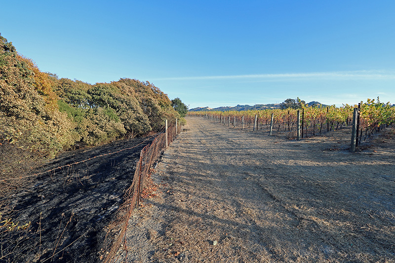Sonoma Napa Vineyard Firebreak