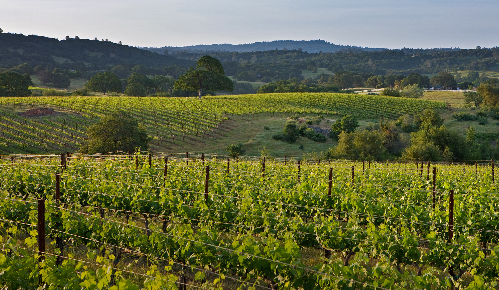 Northern Sierra Foothills Estate Winery & Vineyard