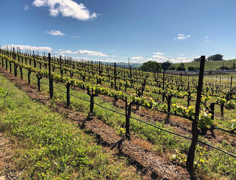 2018 wine grave harvest blog