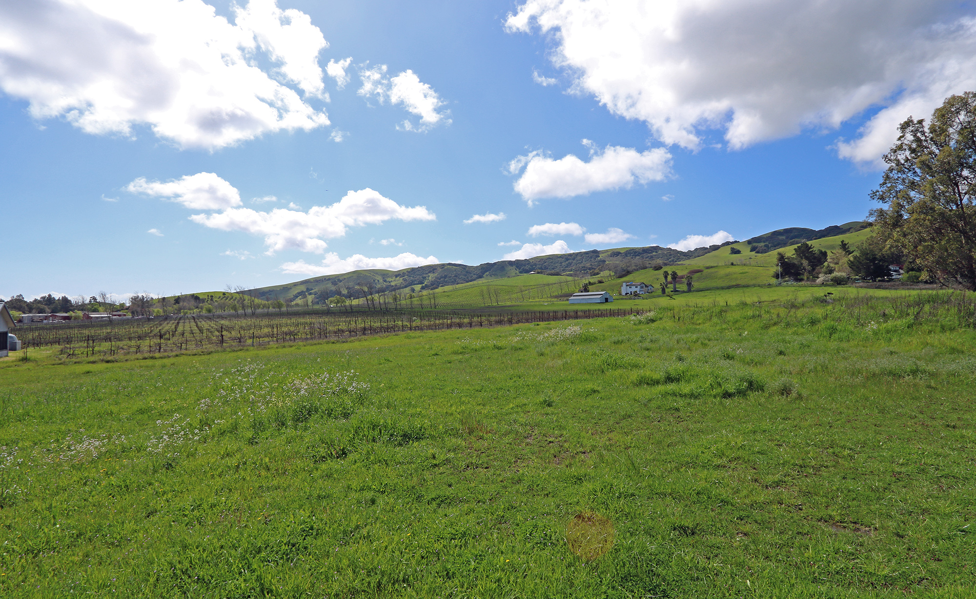 Sonoma Pinot Noir Vineyard And Estate Building Site