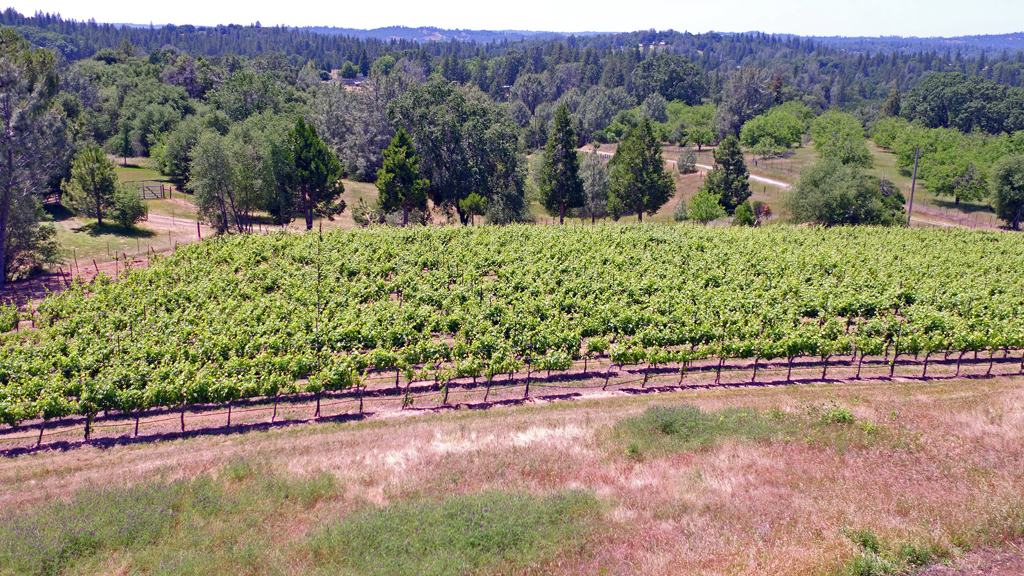 Premium Vineyard And Hilltop Setting