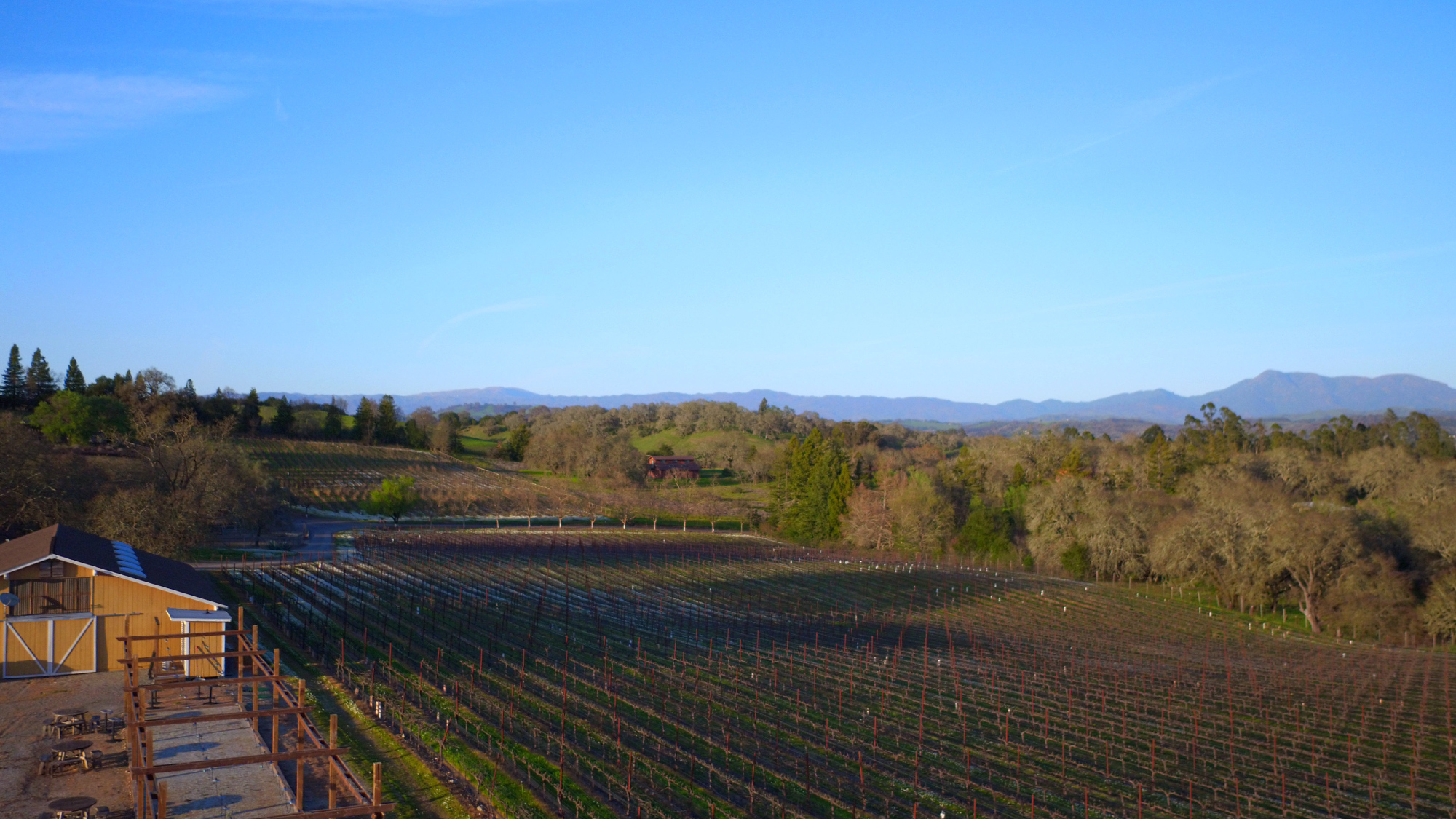 Super Premium Pinot Noir Vineyard Estate, Healdsburg
