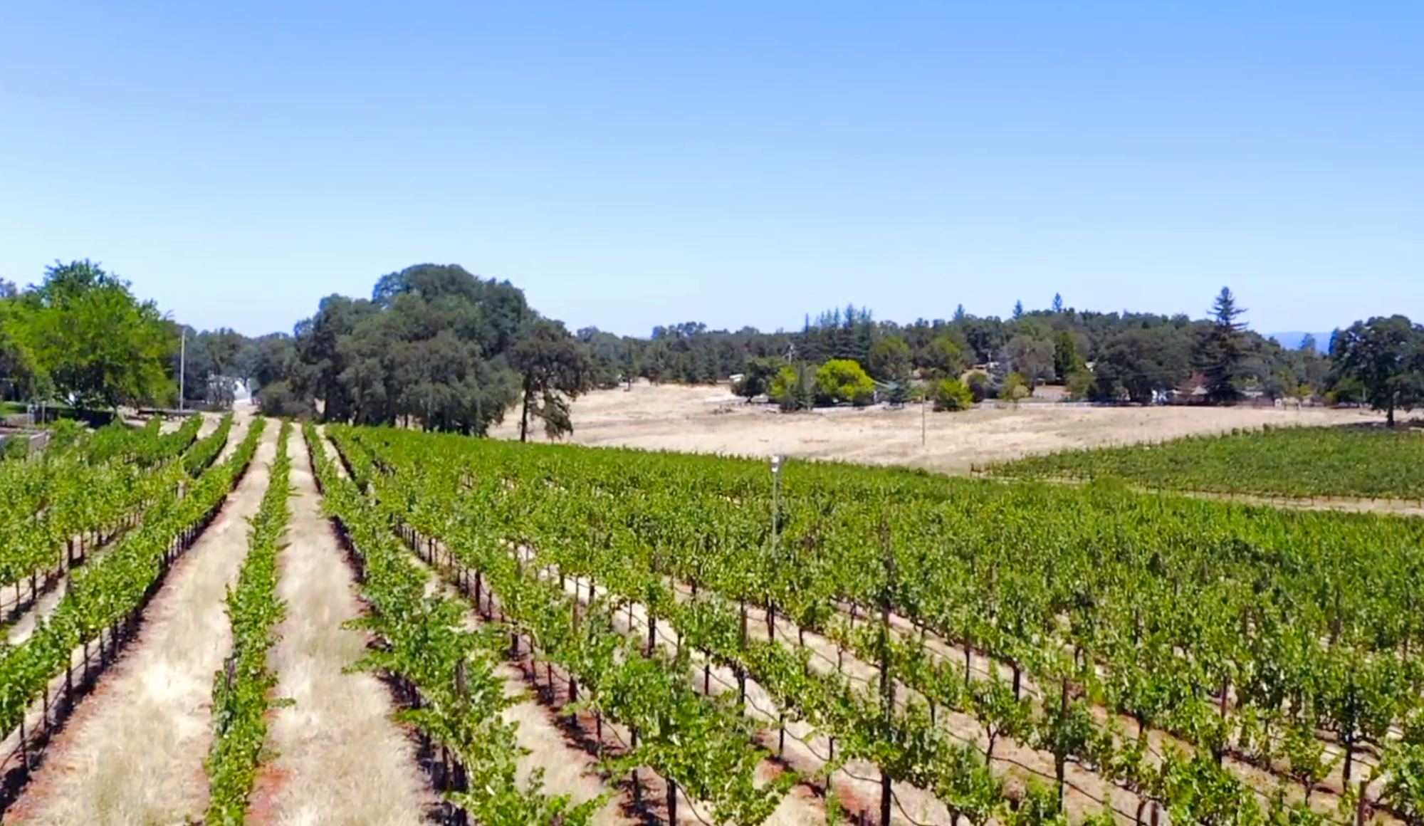 Cielo Estate Winery, Vineyard and Event Ven