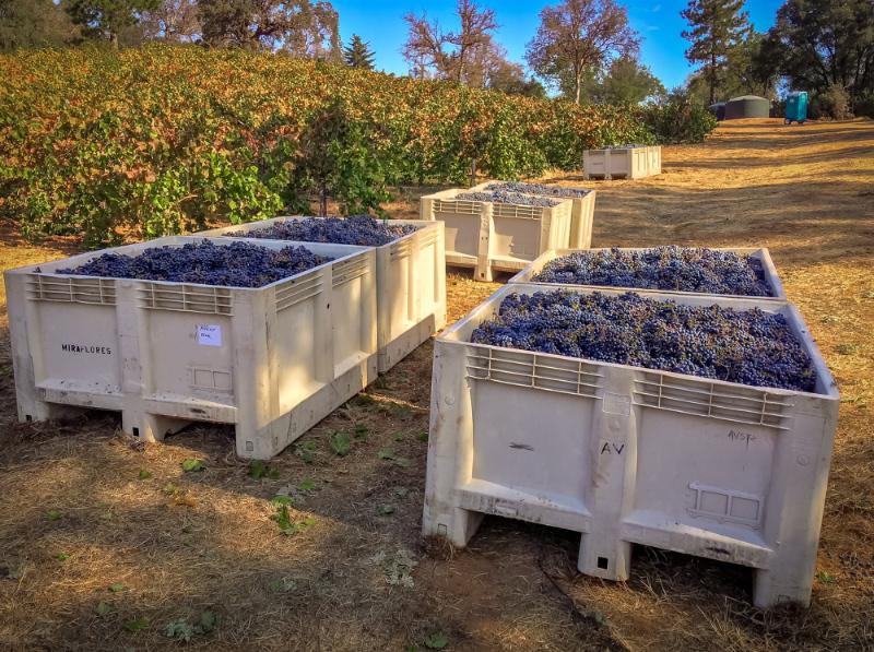 wine grapes real estate
