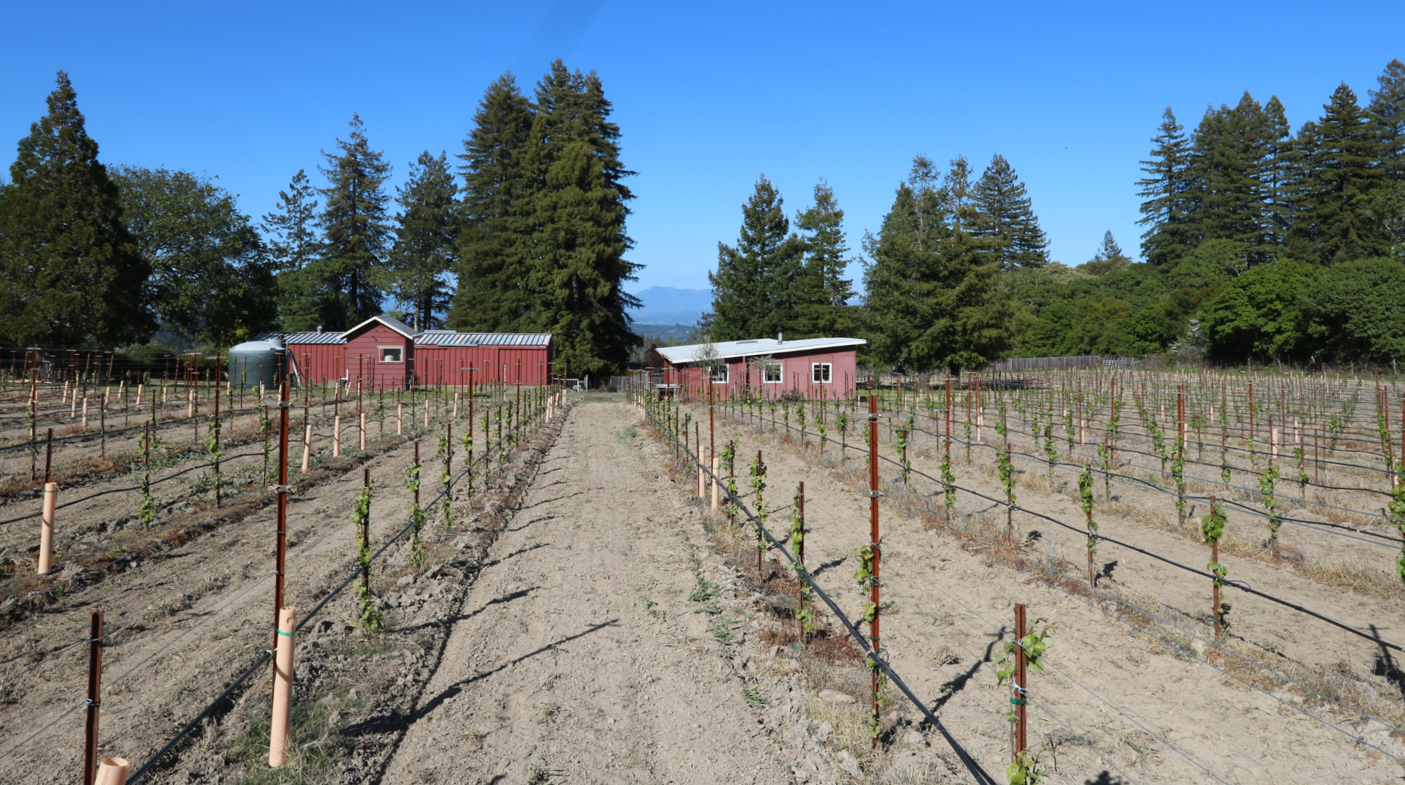 Green Valley AVA and Russian River Valley AVA Vineyard