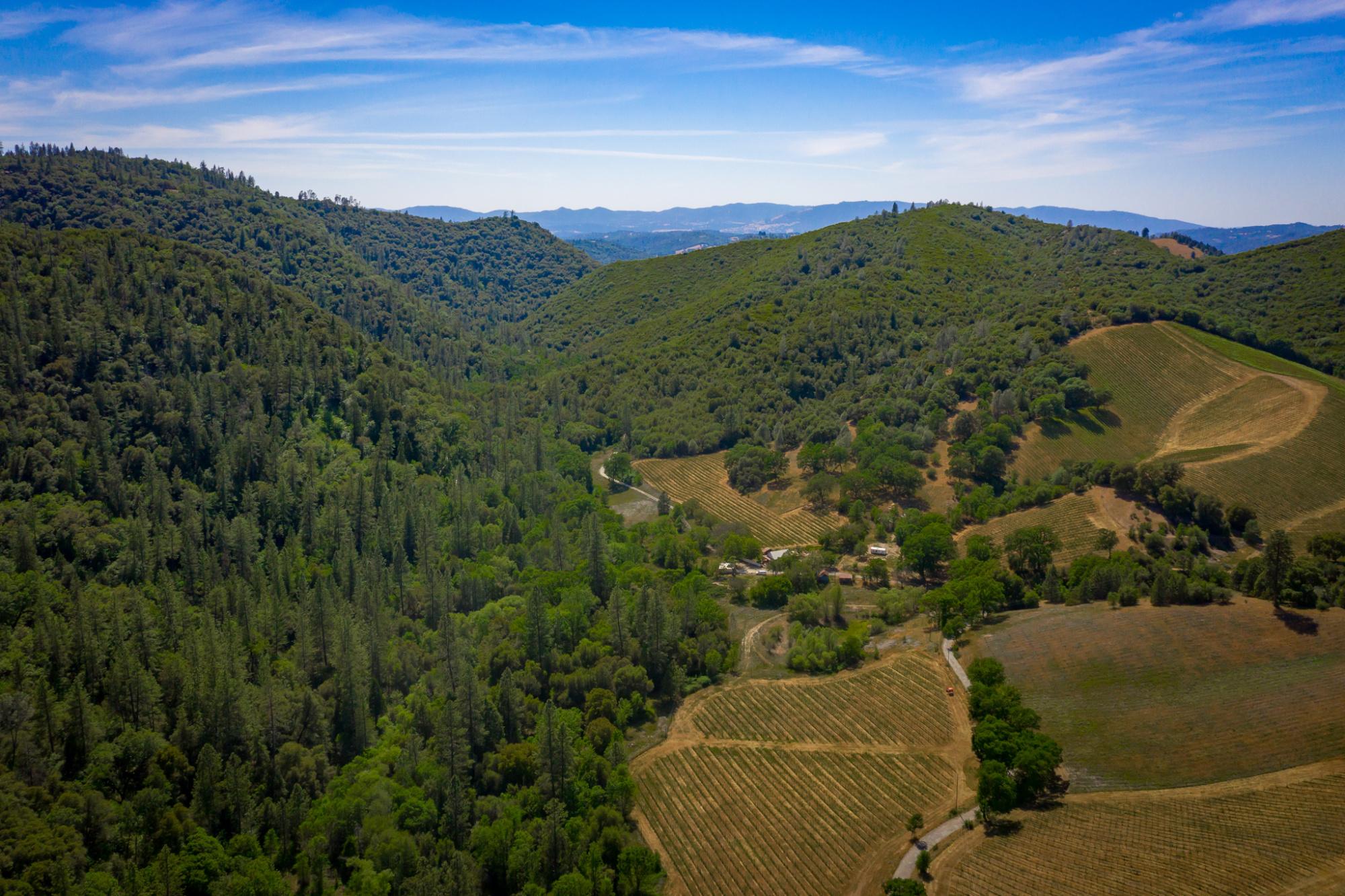Premium Vineyard and Winery Sierra Foothills Calaveras County
