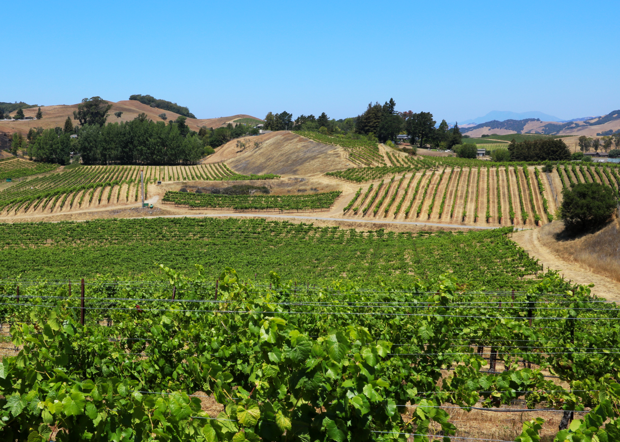Sonoma County Vineyard and Estate Winery