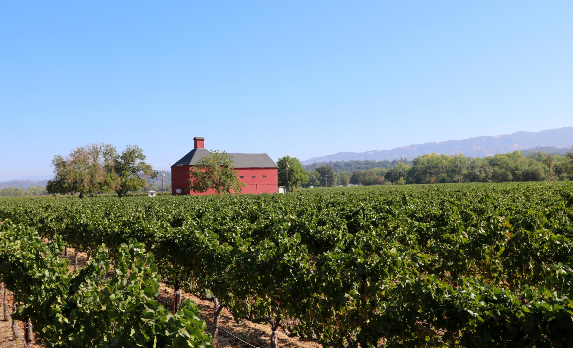Red Barn Vineyard Mendocino County